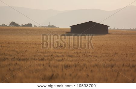 Sunrise Over Wheat Field And Lonely House