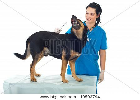 Veterinary And Playful Dog