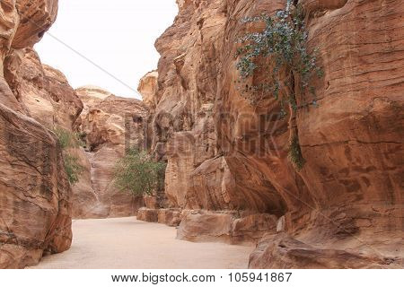 The Siq Leading Up To The Treasury In Petra, Jordan