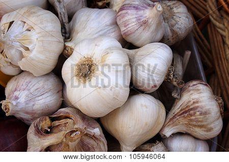 Food. Organic garlic