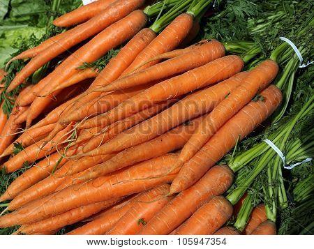 Food. Bundles of organic carrots