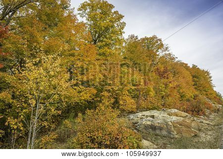 Sugar Maples Growing On Precambrian Shield In Autumn - Ontario, Canada