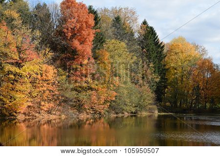 fall leaves on the trees beside a pond