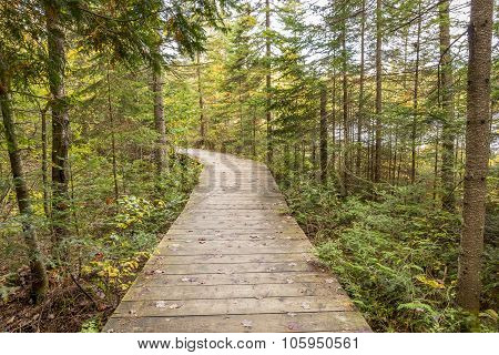 Boardwalk Leading Through A Coniferous Forest -  Ontario, Canada