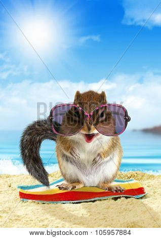 Funny Animal On Summer Holiday, Squirrel On The Beach