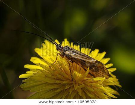 A mosca Caddis em uma flor amarela