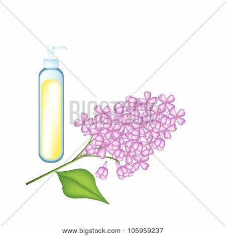 Essential Oil With Purple Lilac On White Background