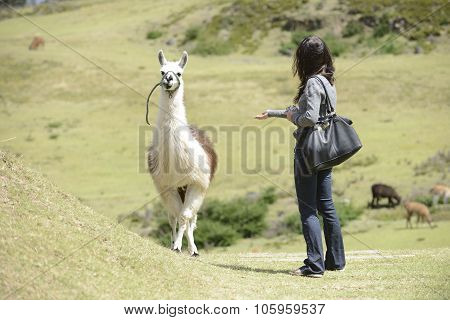 Llama and a woman