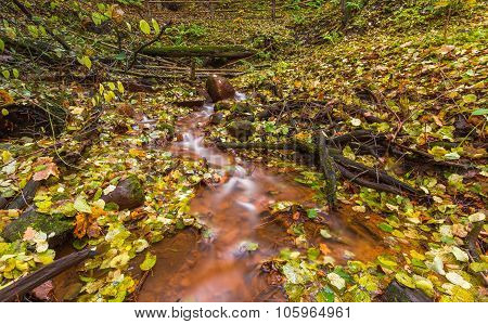 Beautiful Wild Autumnal Forest With Small Stream.
