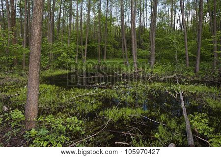 the swamp in the forest in the day