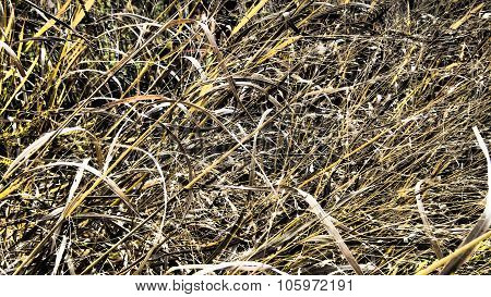 Dry Grass Texture Background. Dramatic Tone.