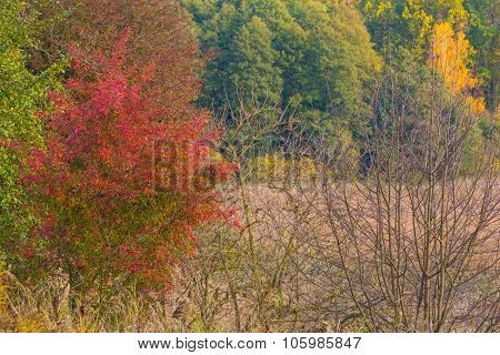 Beautiful Landscape Of Autumnal Forest Near Lake