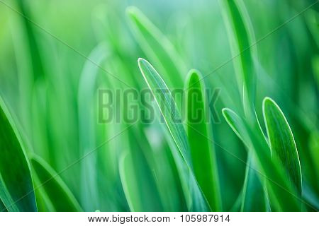 Green grass Soft focus