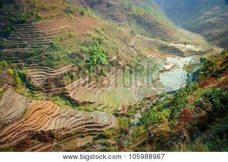 Nepali ricefields