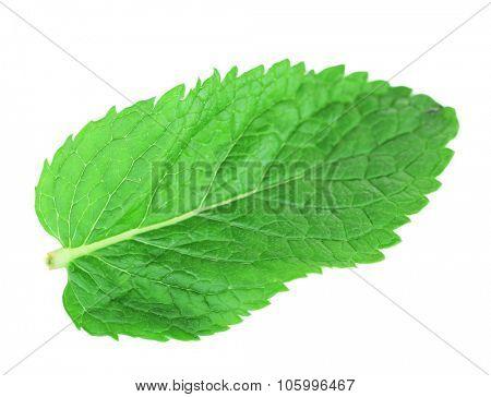 Fresh mint leaf isolated on white, close up