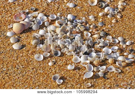 Selective Focus Of Clam Shell At The Beach