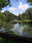 Hart Springs On The Suwannee River
