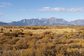 picture of fynbos  - Mountains in the Cape South Africa with dry fynbos vegetation in the foreground - JPG