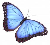 stock photo of blue butterfly  - illustration of a beautiful blue morpho butterfly - JPG