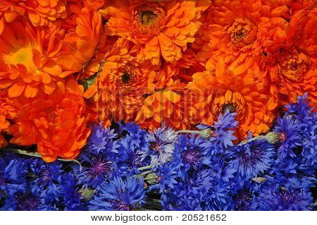 Ringelblume und Kornblume