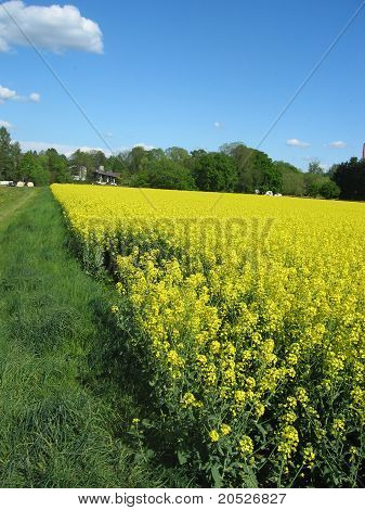 a flowery field