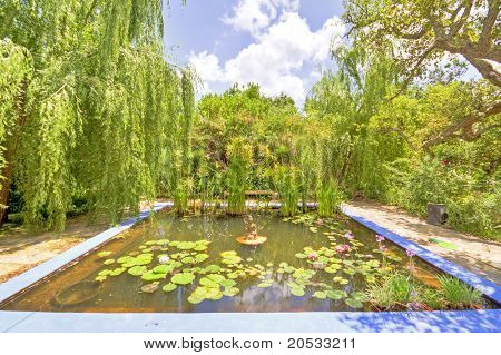 Beautiful garden with a little pond in the middle