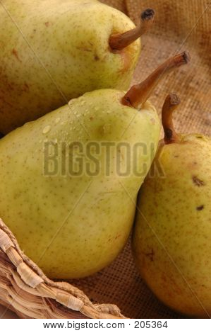 Bartlett Pears Vertical