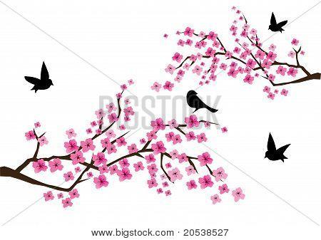 Sacura Branches
