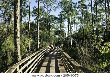 Corkscrew Swamp Sanctuary Florida