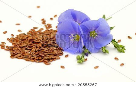 Seeds and flowers of flax