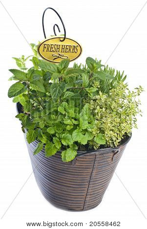 Mixed Fresh Herbs in a Metal Planter