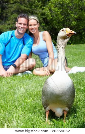 Young loving couple relaxing in park and goose.