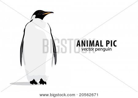 Illustration of a pinguin on white background