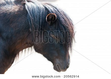 pony closeup