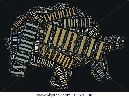 Wordcloud of turtle