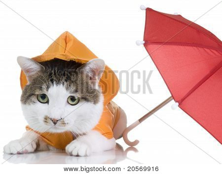 All-weather Cat