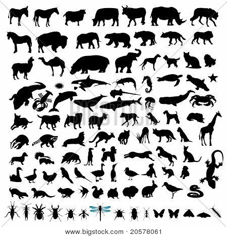 100 Animal Silhouettes