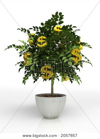Money Tree In Flowerpot Isolated On White Background