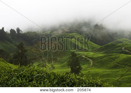 Cameron Highlands Tea Plantation Fields