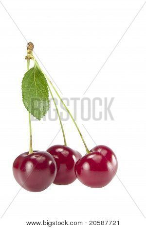 Three cherries with leaves on  branch