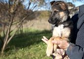 stock photo of mongrel dog  - Puppy mongrel on hands at the man in autumn afternoon - JPG