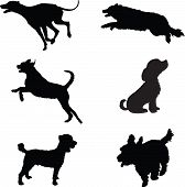 stock photo of scottie dog  - Six black silhouettes of dogs at play - JPG