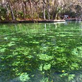 Wekiwa Springs In Florida
