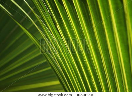 Frond Lines