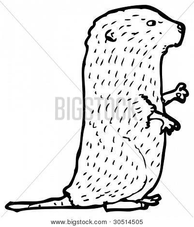 Arvicola sapidus ilustración (versión de la trama)