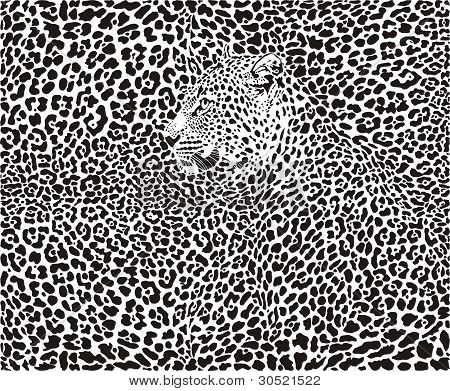 Leopard Background.eps