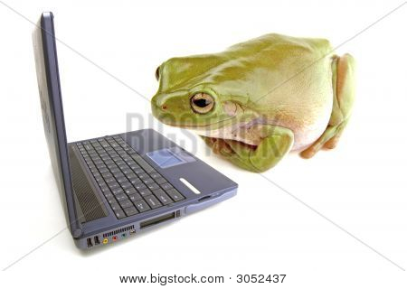 Computador de sapo
