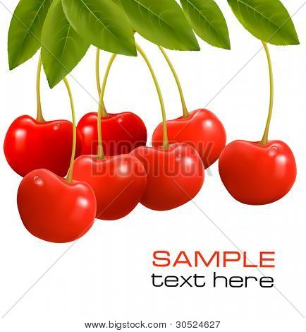 Bunch of fresh, juicy, ripe cherries. Vector illustration.
