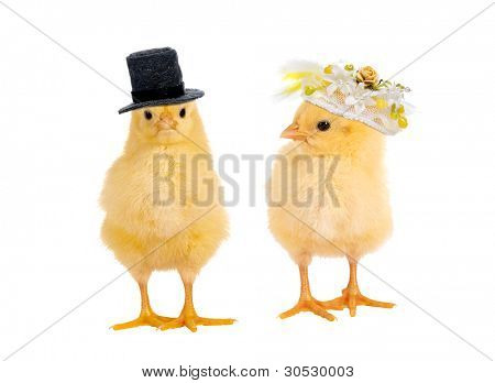 Couple of newborn yellow easter chicks dressed as a bride and groom for a wedding