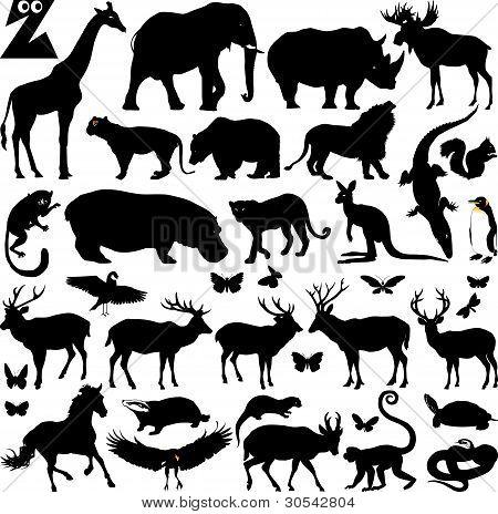 Gran Zoo